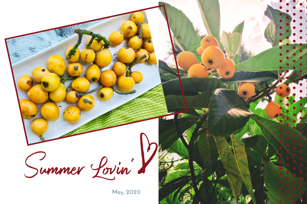 Generosity from the loquat trees