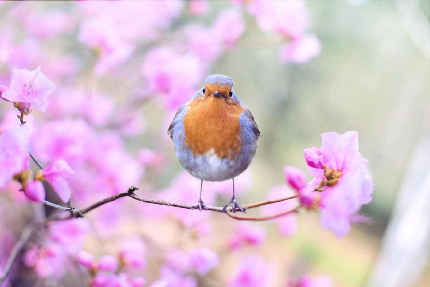 Lily the bird
